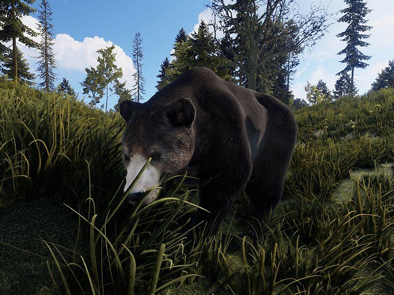 RUST Bear
